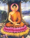 Vị trí của Tịnh độ tông trong giáo pháp của Đức Phật